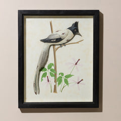 FRAMED PARADISE FLYCATCHER WITH GLASS