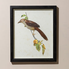 FRAMED BROWN TRUSHER WITH GLASS