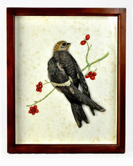 FRAMED WHITE THROATED SWIFT WITH GLASS