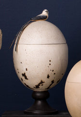 Scissor-Tailed Flycatcher Egg Caddy