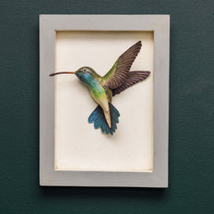 GREEN-THROATED HUMMINGBIRD SHADOW BOX