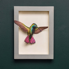 BROAD-BILLED HUMMINGBIRD SHADOW BOX