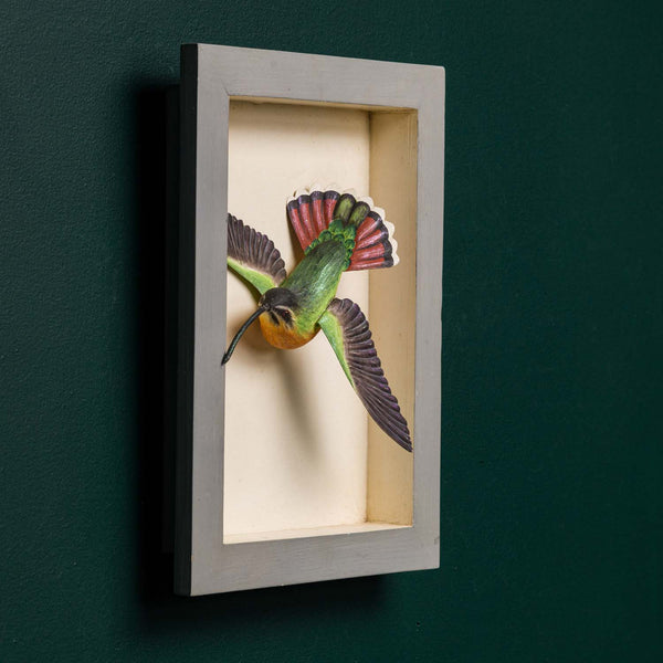 RUFOUS CRESTED COQUETTE SHADOW BOX