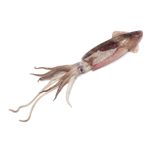 Whole Squid 5lb