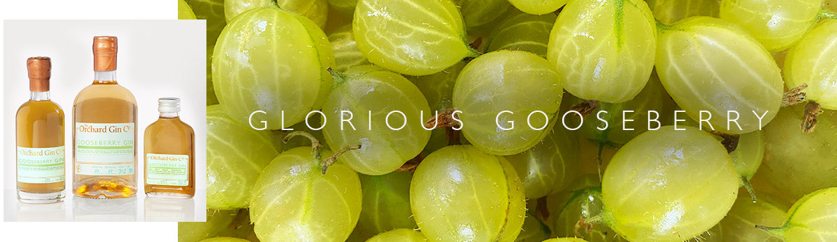 orchard gin co gooseberry gin