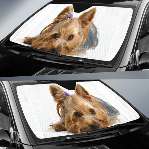 Image of Yorkie