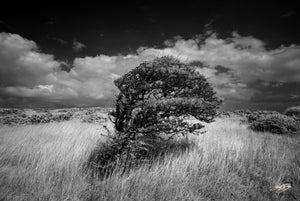 'Windswept' Black and White Photographic Print