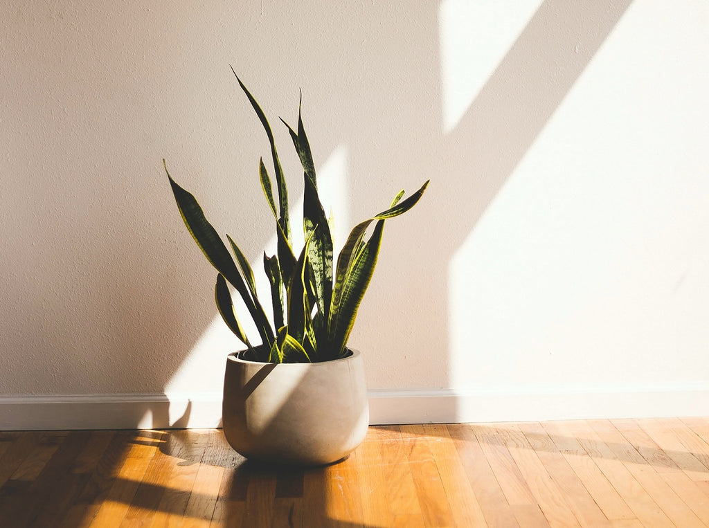 Plant Tips: Helping purify your air at home with plants