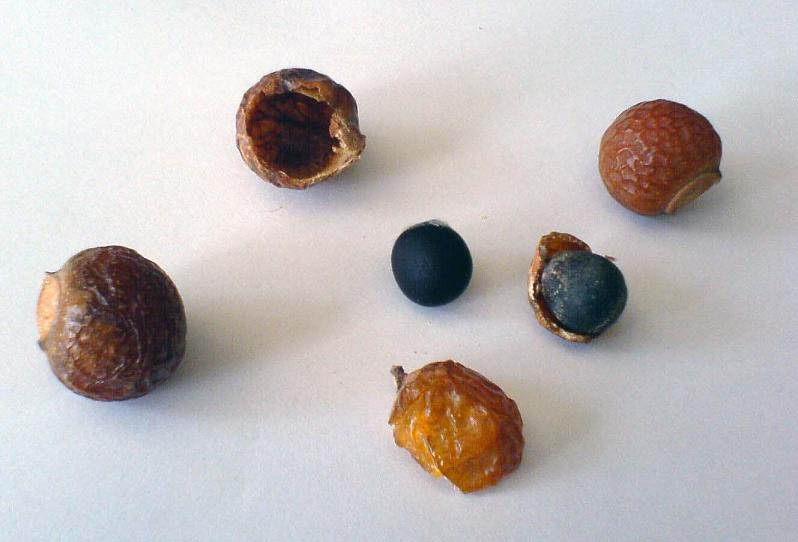 An assortment of soap nuts
