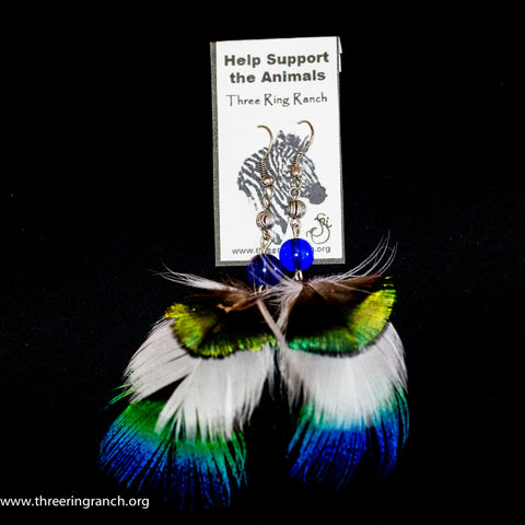 Feathered earrings- peacock feathers
