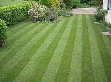 Turf - Best Quality Cultivated Lawn Turf Turf