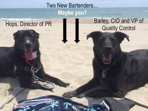 Dog friendly bar, taproom featuring craft beer, wine, cider, kombucha, growlers in Durham, NC
