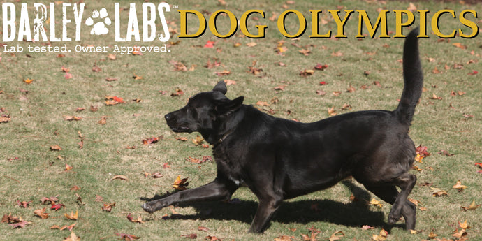 Triangle Dogs Go for Gold and a Year's Supply of Dog Treats at the Barley Labs Dog Olympics