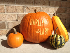 Barley Labs Dog Treats