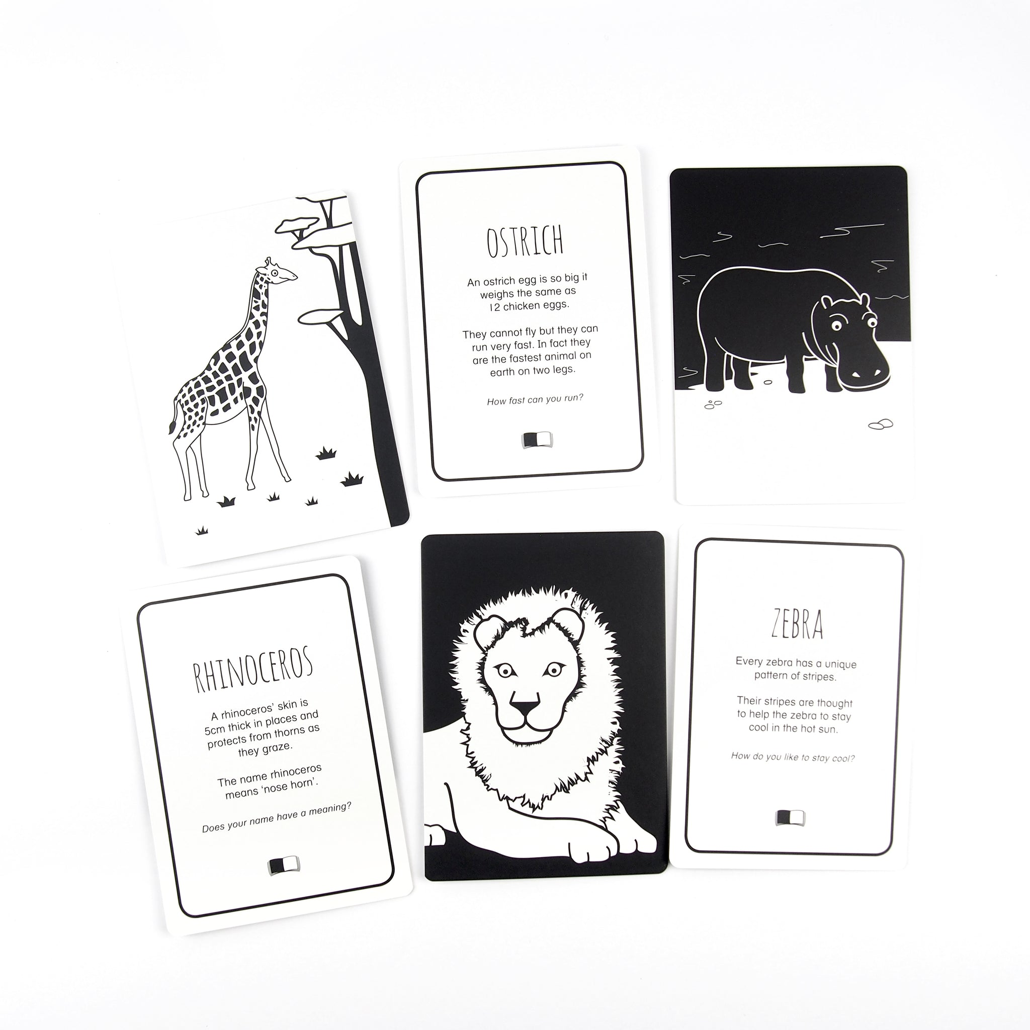 Flash Cards - Spectacular Animals Of Africa