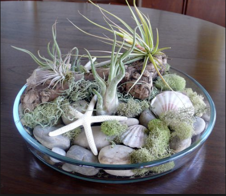 August 30th Make Your Own Air Plant Garden