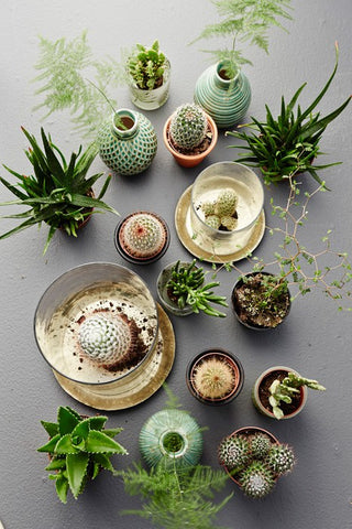 March 22 - Succulent Mini-Garden Workshop