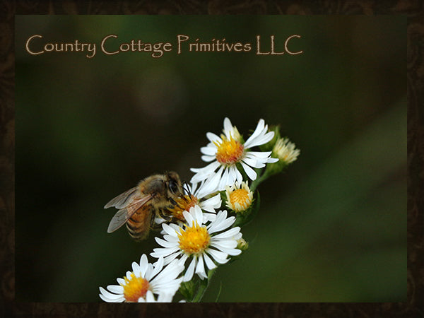 Help Our Pollinators