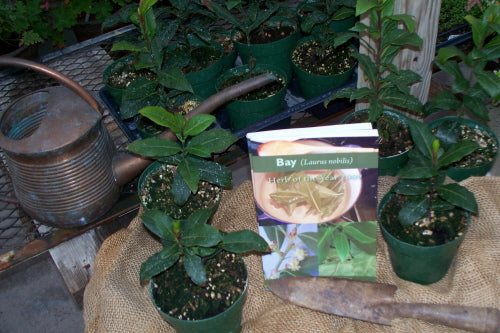 2009 Herb of the Year -Bay Book!!