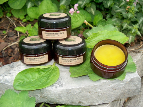 Chickweed & Plantain Wildcrafted Salve