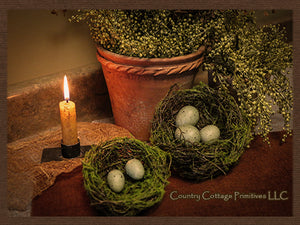 Bird Nest with Eggs