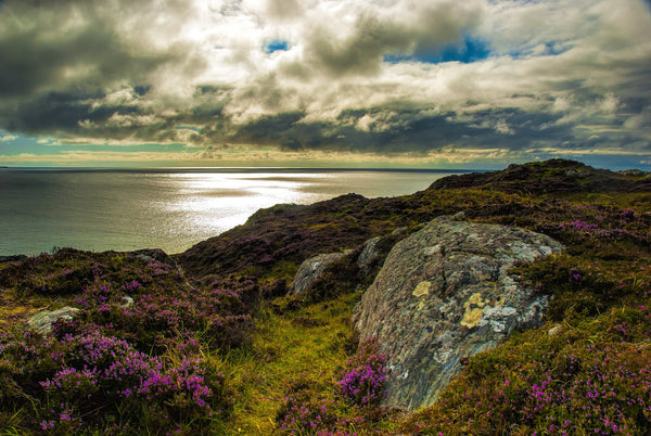 Top 5 Spring Walks Scotland