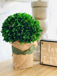 GREEN THUMB PRESERVED GREENERY- BURLAP - Infinity Raine