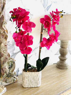 EVERYTHING YOU WANT ARTIFICIAL ORCHID-FUSHIA - Infinity Raine