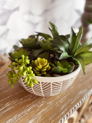 Full Of Life Succulent Bowl - Infinity Raine