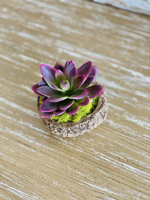 OUT IN NATURE POTTED SUCCULENT-PURPLE - Infinity Raine