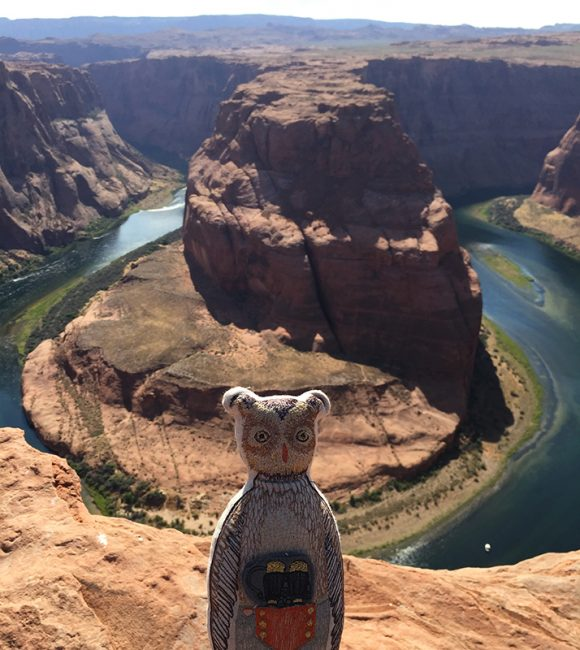 Owl at the top of Horseshoe Bend