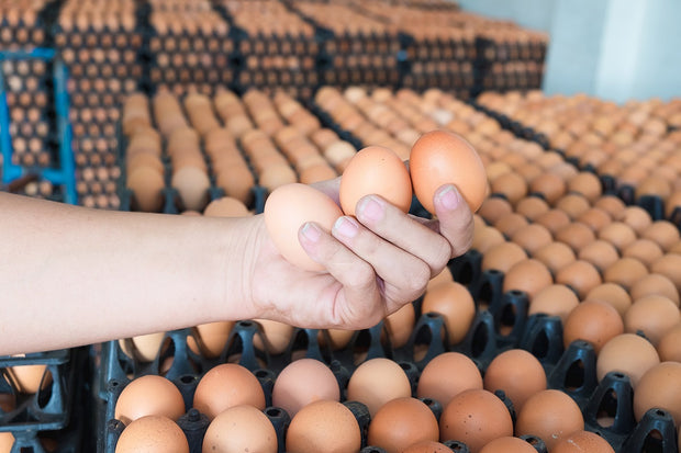 Free Range Brown Chicken Eggs (10 Dozen or More)