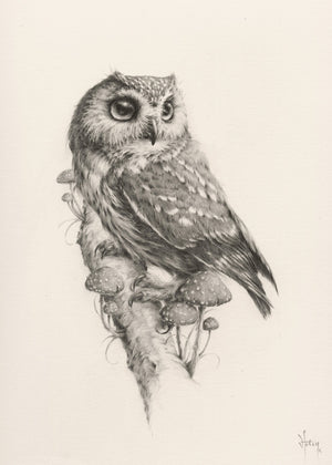 "Vanessa Foley ""Northern Saw Whet Owl"""