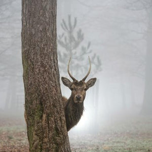 Deers and Nature - Stag Art by Max Ellis