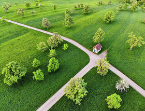 Trees On Green Spring Meadow Aerial View - Art Print