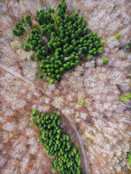 Aerial Photography by Matthias Hauser - Geometric Forest