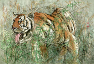 Tiger 43 Chinese Brush Painting by River Han
