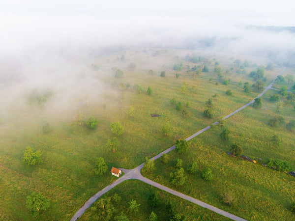Spring meadow with trees morning mood - Aerial Photography by Matthias Hauser
