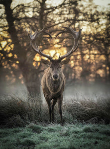 The Stag with the heart shaped antlers 3 by Max Ellis