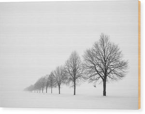 Avenue With Row Of Trees In Winter - Wood Print