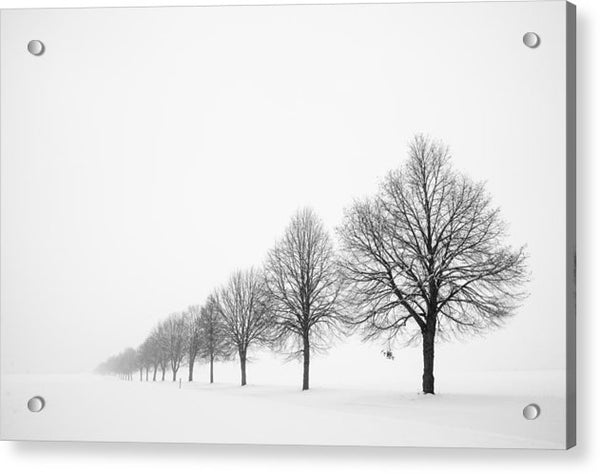 Avenue With Row Of Trees In Winter - Acrylic Print