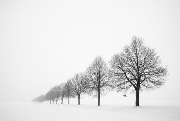 Avenue With Row Of Trees In Winter - Art Print