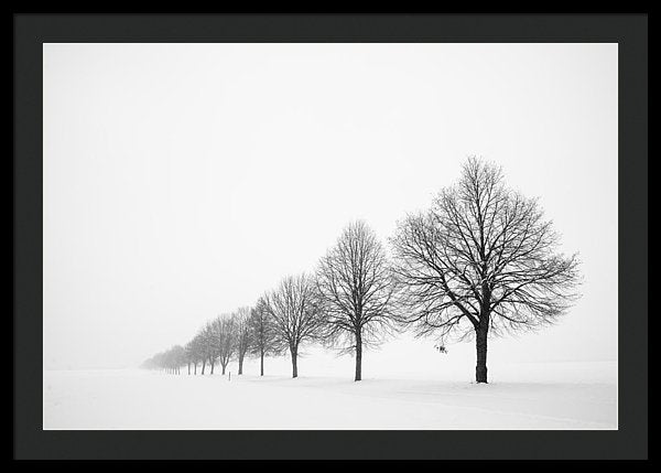 Avenue With Row Of Trees In Winter - Framed Print