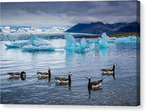 Barnacle Geese In Glacier Lagoon In Iceland - Canvas Print