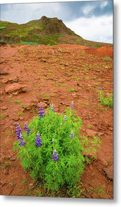 Colorful Iceland Landscape Haukadalur - Metal Print