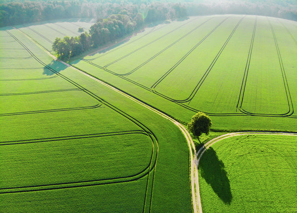 Green Fields in the morning Aerial Photography by Matthias Hauser