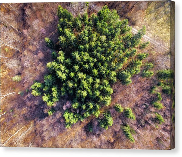 Drone Photography Trees In Forest From Above - Canvas Print