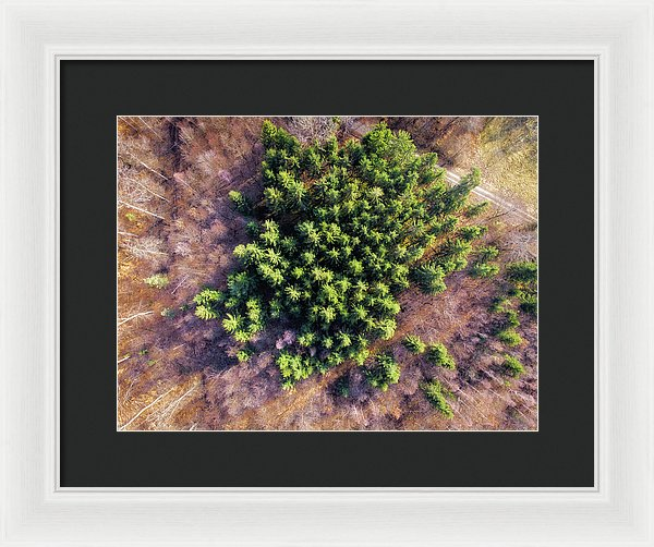 Drone Photography Trees In Forest From Above - Framed Print