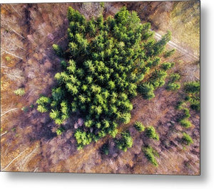 Drone Photography Trees In Forest From Above - Metal Print