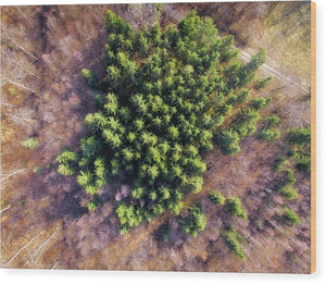 Drone Photography Trees In Forest From Above - Wood Print